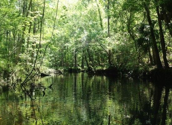 waccasassa-river