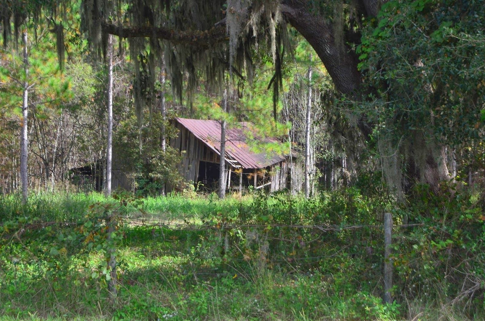 levy-county-shack